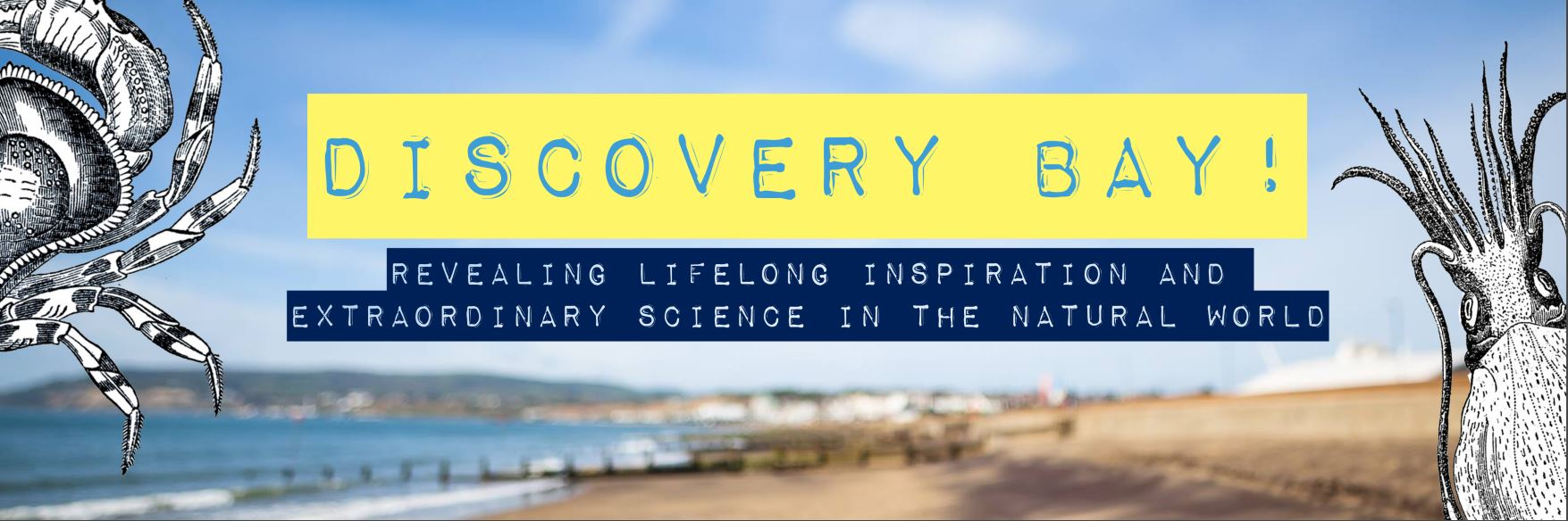 discovery bay header